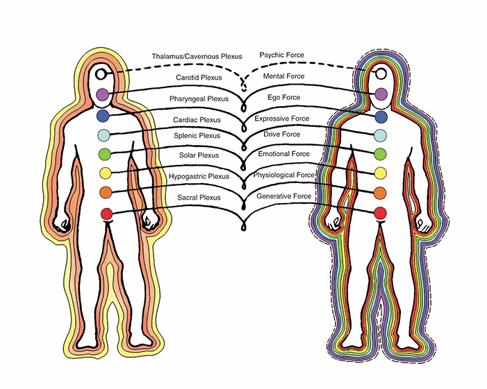 chakras diagram of plexuses, force centers, and light bodies.