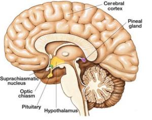Oxytocin ans sunlight